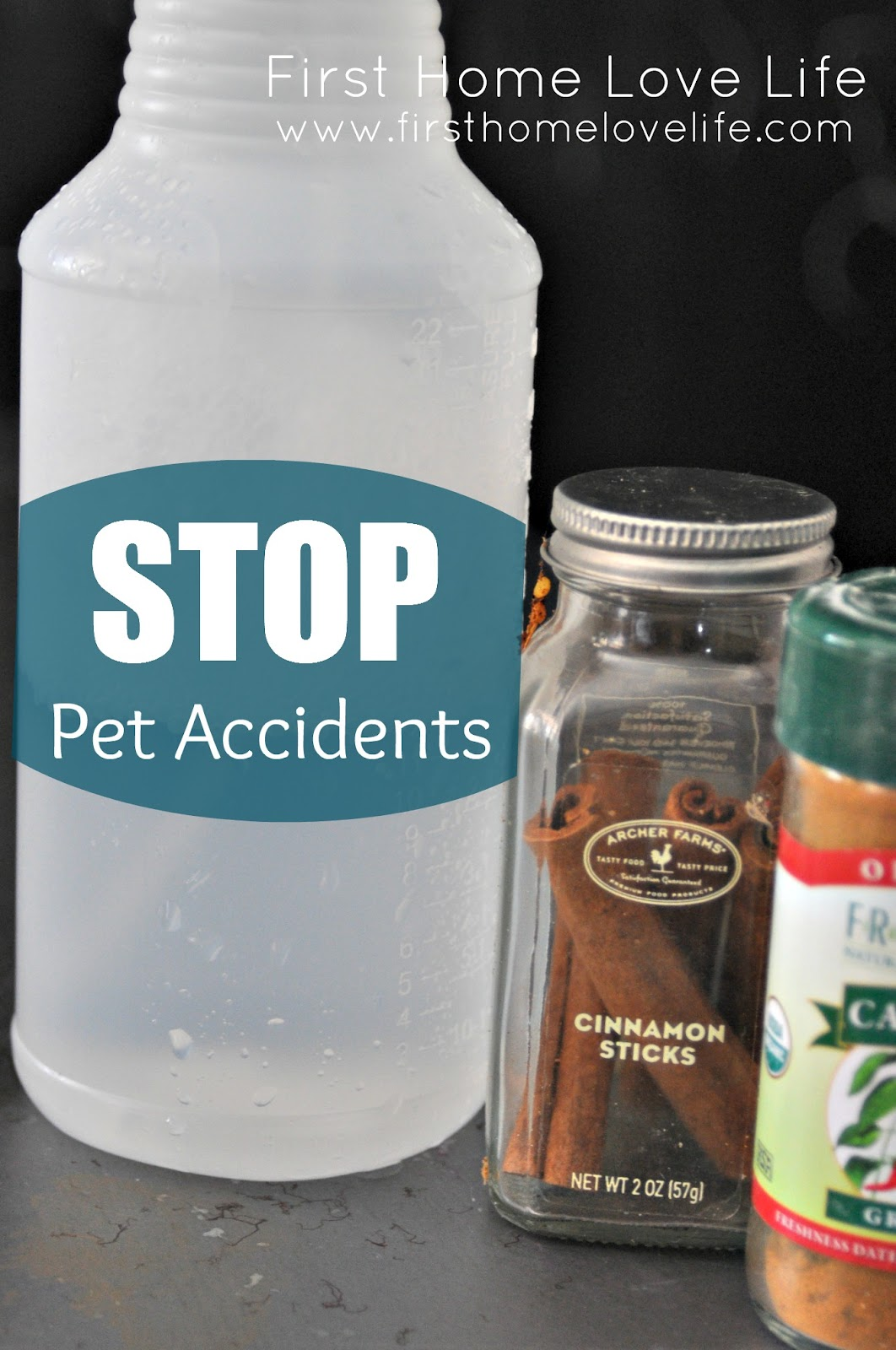 how to: stop pet accidents! - first home love life