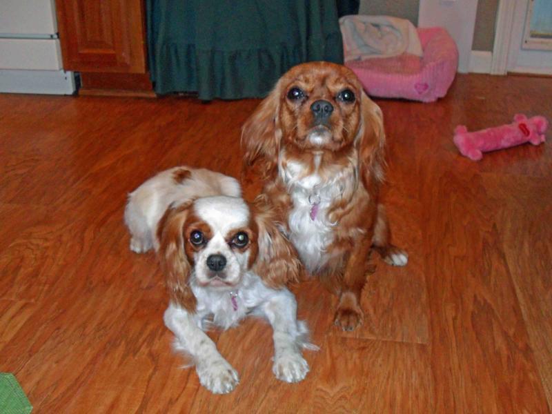 Sophie & Sadie LR