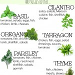 Creating a Kitchen Herb Garden