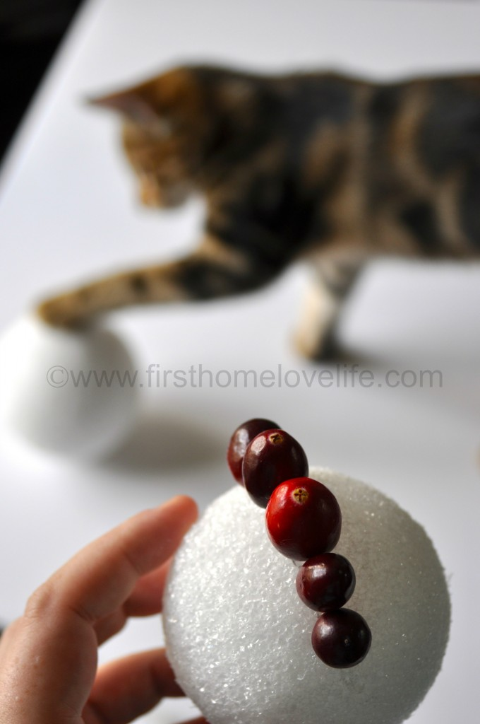 cranberry cat
