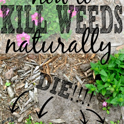 3 Killer Ways to Get Rid of Weeds Naturally