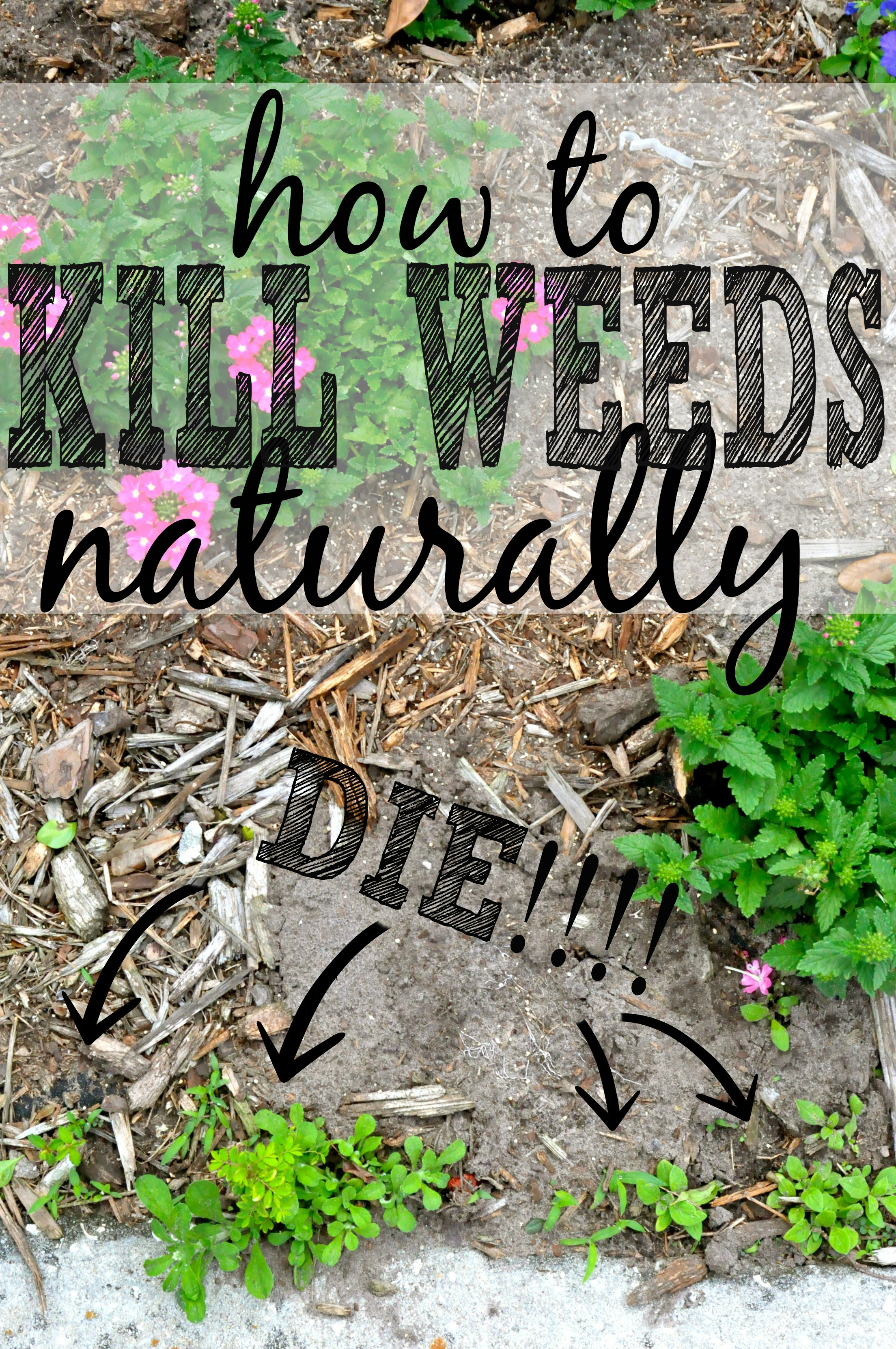 3 Killer Ways to Get Rid of Weeds Naturally First Home Love Life