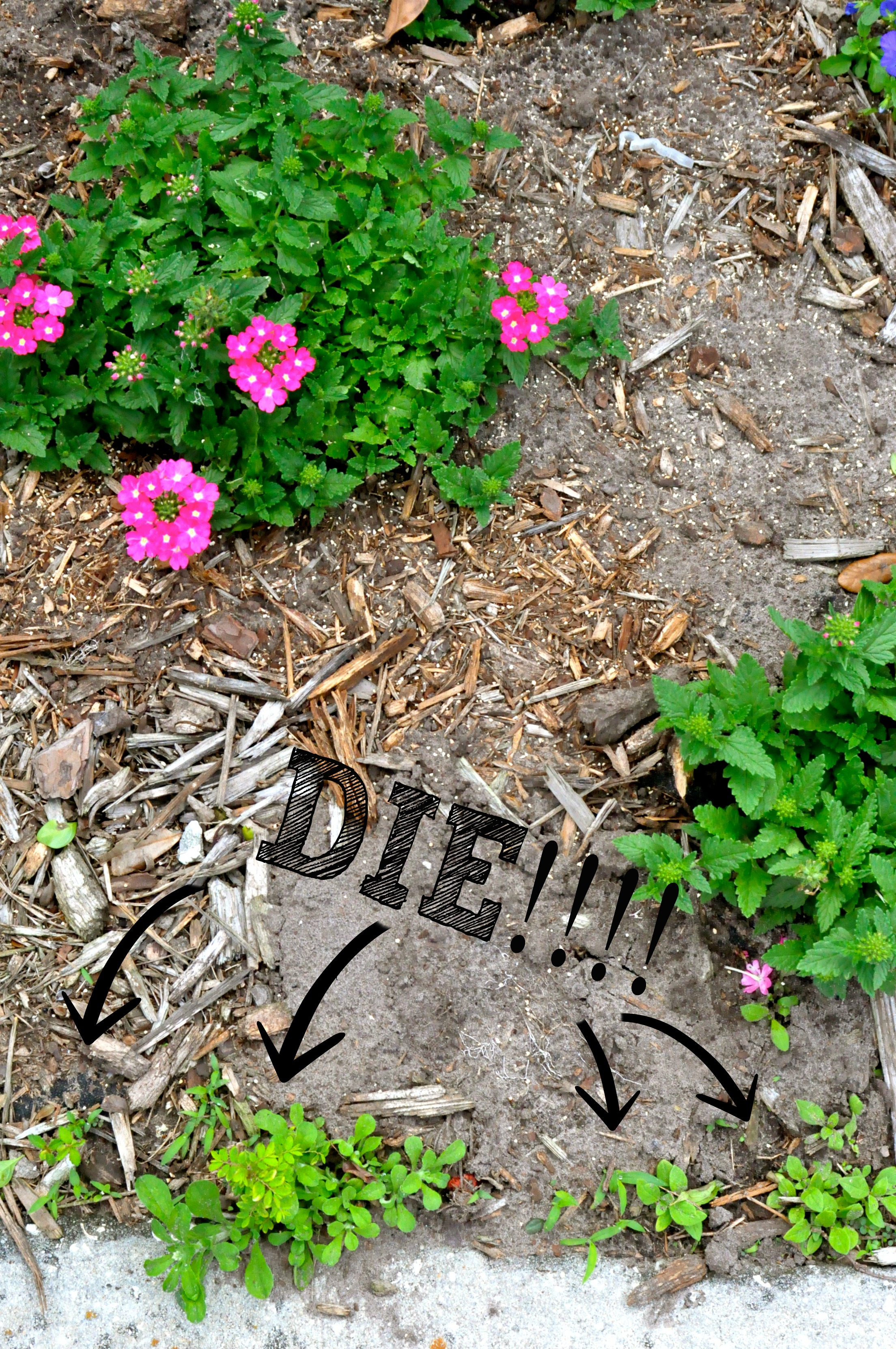 Kill weeds in flower beds - 3 Killer Ways To Get Rid Of Weeds Naturally With Ingredients You Already Have