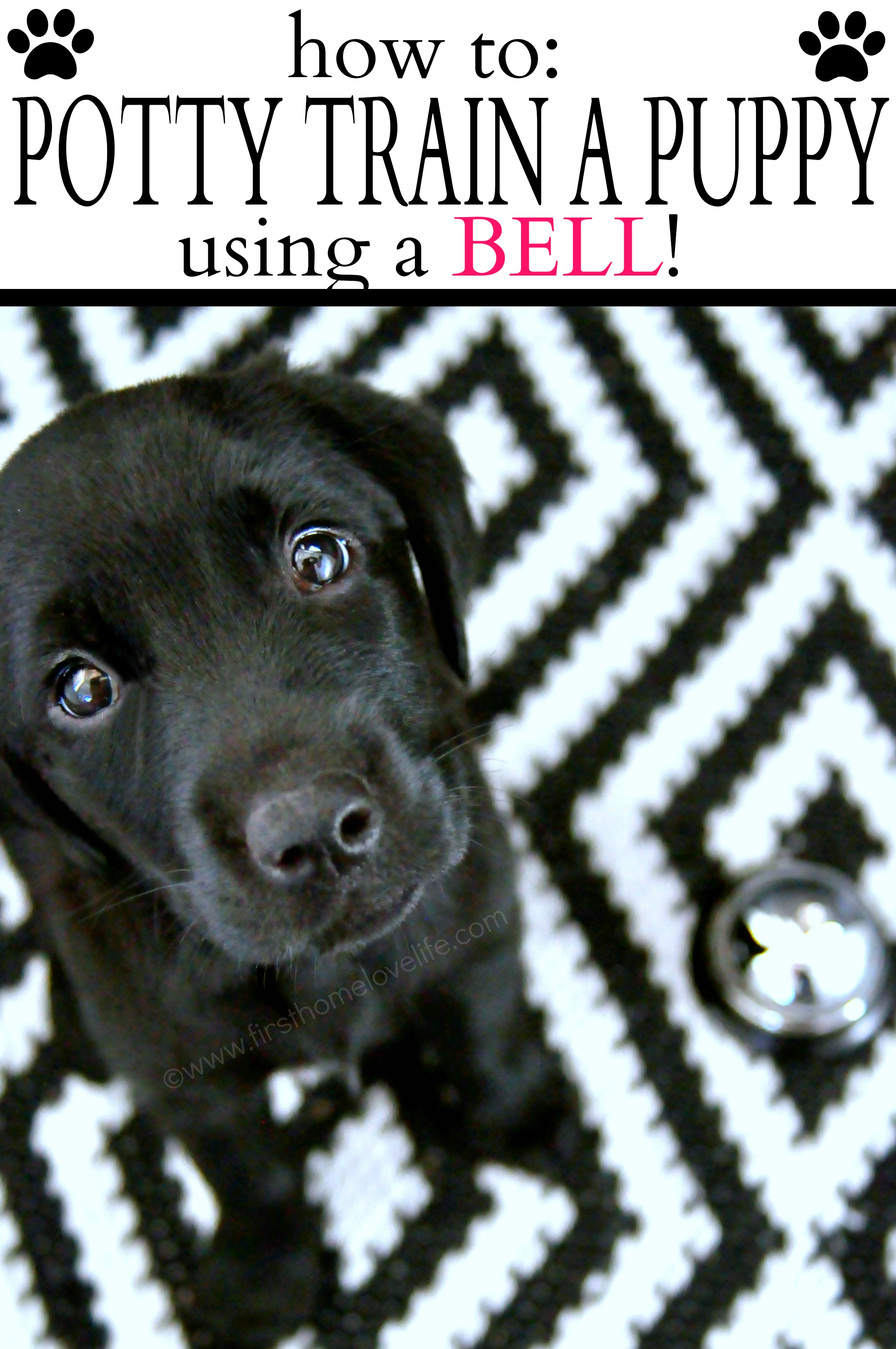 Potty Training Puppy Using A Bell First Home Love Life