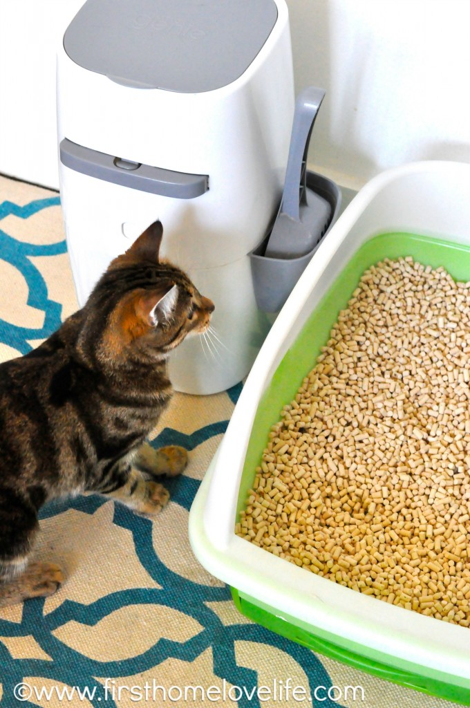 No more litter box odor with this simple system! #pets