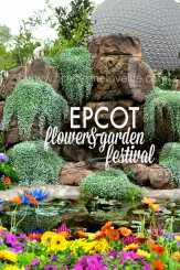 Epcot_cover flower garden