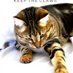 Cat Claw Covers