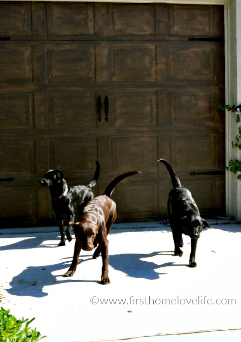 labradoors outside via www.firsthomelovelife.com