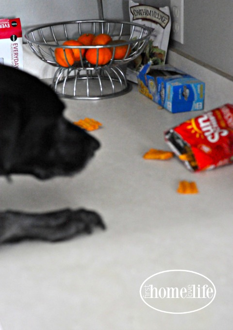 labrador-eating-chips-via-www-firsthomelovelifecom